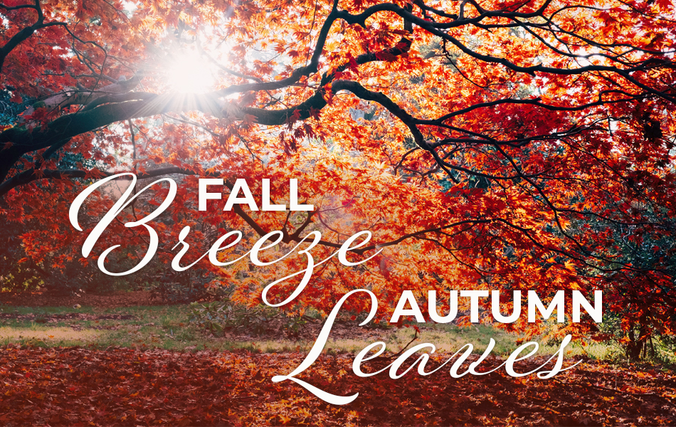 Download the images for beautiful autumn leaves.